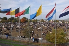 Flags-on-the-Fair